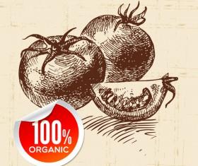 Tomato hand drawn sketch vector
