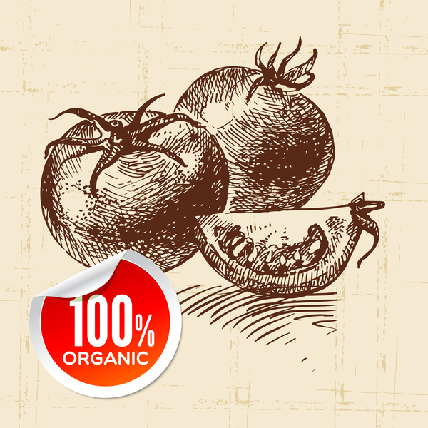 Tomato hand drawn sketch vector