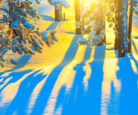 Winter golden sun and snow Stock Photo