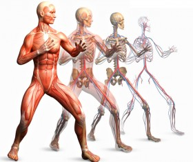 anatomy Stock Photo 33