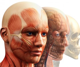 anatomy Stock Photo 34