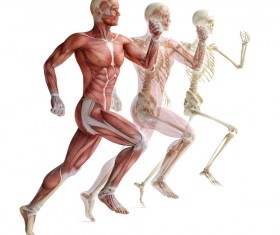 anatomy Stock Photo 35