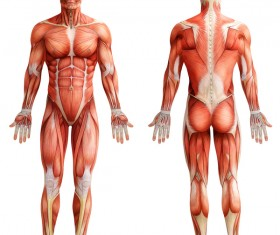 anatomy Stock Photo 37