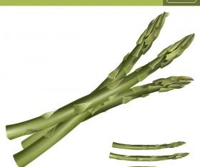Asparagus realistic vectors