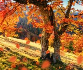 Autumn forest Stock Photo 01