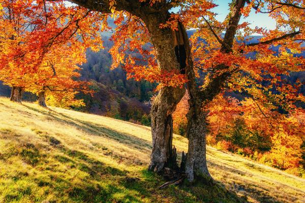 Autumn forest Stock Photo 03