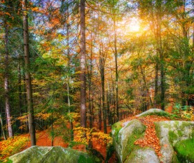 Autumn forest Stock Photo 08