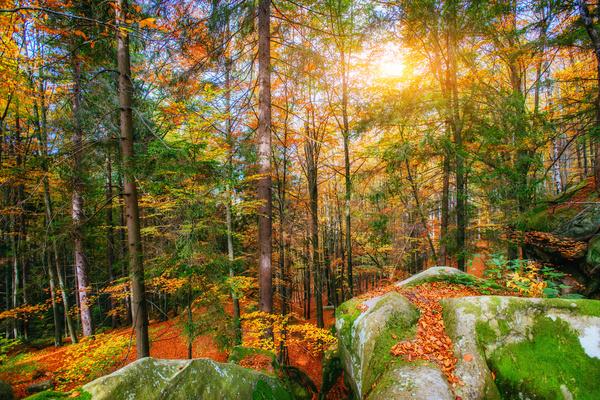 Autumn forest Stock Photo 08
