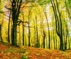Autumn forest Stock Photo 10