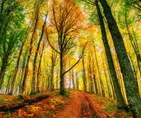 Autumn forest Stock Photo 11