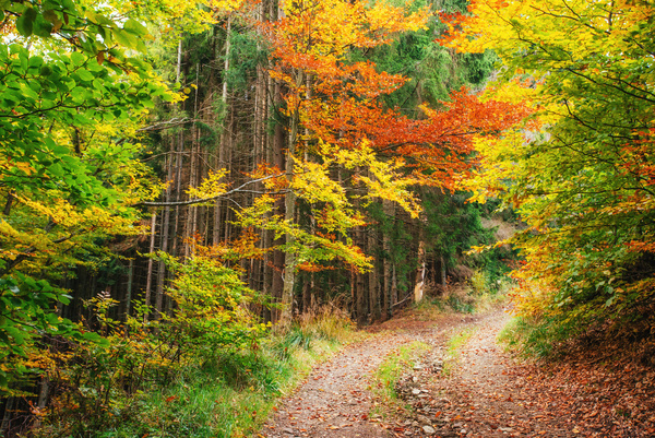 Autumn forest Stock Photo 12