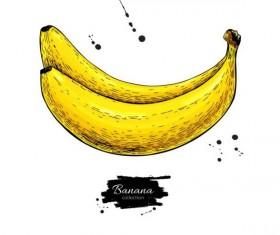 Banana hand darwing vector material 01