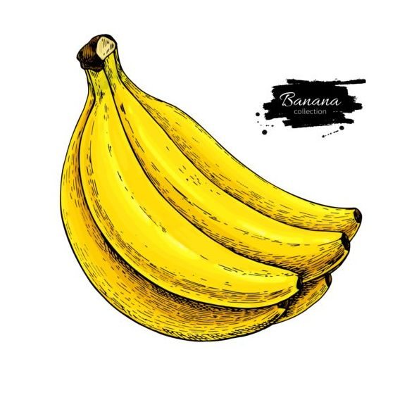 Banana hand darwing vector material 02