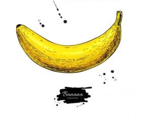 Banana hand darwing vector material 03