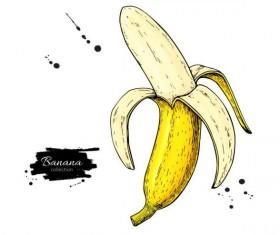 Banana hand darwing vector material 04
