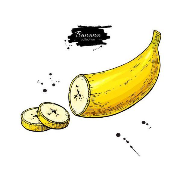 Banana slice hand darwing vector