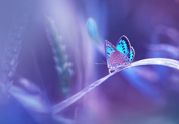 Beautiful butterfly 01