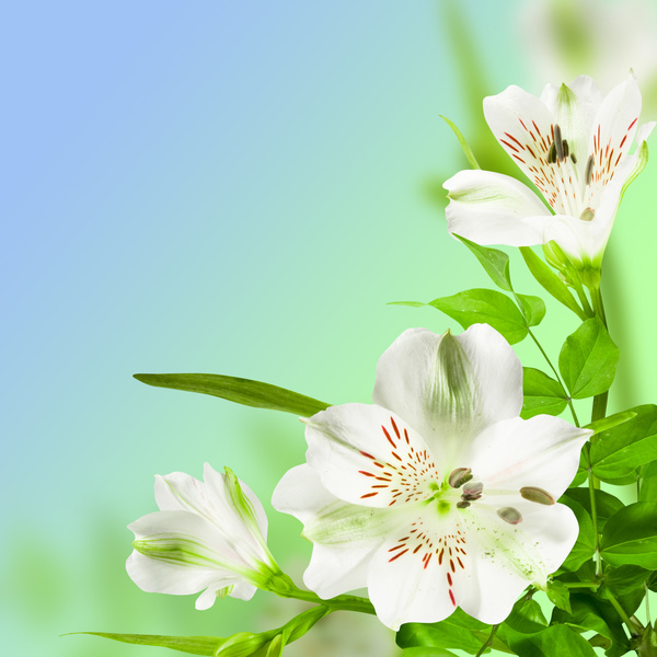 Beautiful Flowers Hd Picture 11 Free Download