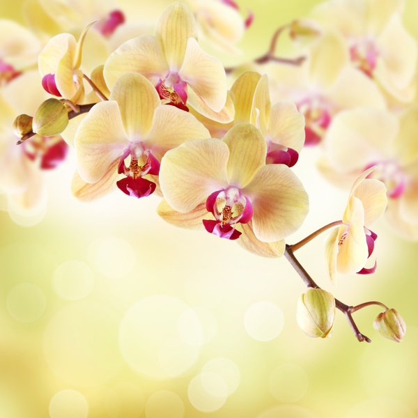 Beautiful flowers hd picture 22 flowers stock photo free download beautiful flowers hd picture 22 voltagebd Image collections