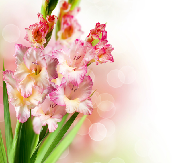 23 amazing flowers ndash - photo #16