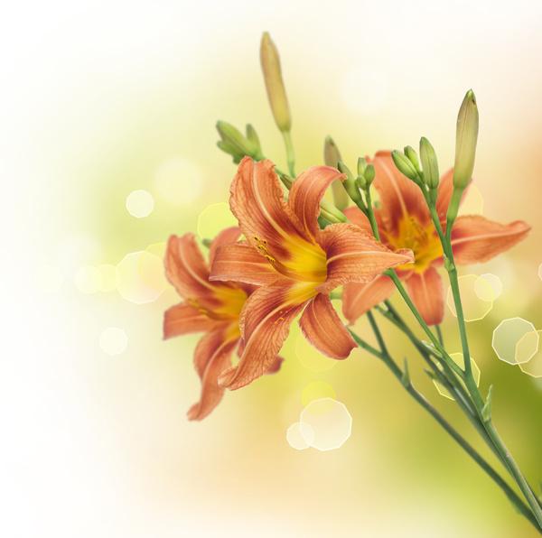 25 free hd flowers - photo #43