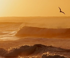 Beautiful sunset sea view with seagulls HD picture
