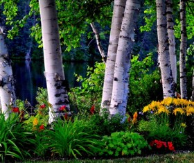 Birch forest painting Stock Photo
