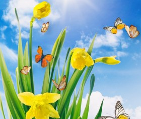 Blue sky background Narcissus with butterfly HD picture