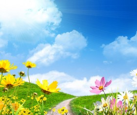 Blue sky background and colorful wildflowers HD picture