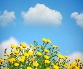 Blue sky background with beautiful little yellow flowers HD picture