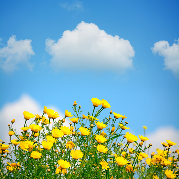 blue sky background with beautiful little yellow flowers