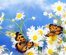 Blue sky background with beautiful wildflowers and butterflies HD picture
