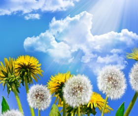 Blue sky background with dandelion HD picture