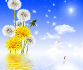 Blue sky background with water dandelion HD picture