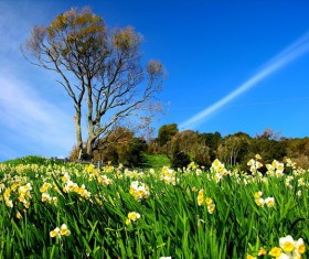 Blue sky under the daffodil Stock Photo