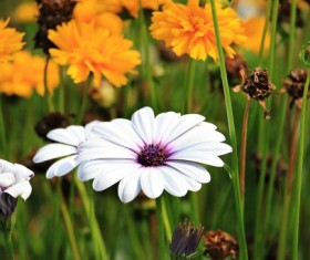 Bright daisy flowers Stock Photo