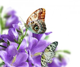 Butterfly and flower HD picture