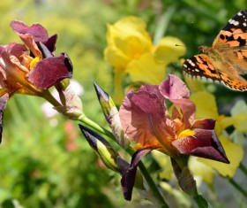 Butterfly flew the withered flowers HD picture