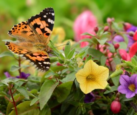 Butterfly in the flowers HD picture
