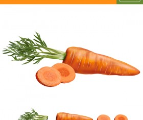 Carrot with slice realistic vectors