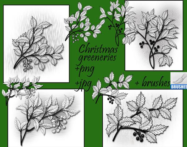 Christmas greeneries photoshop brushes