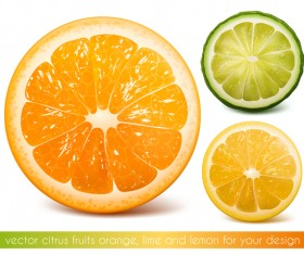 Citrus fruits vector illustration