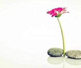 Cobblestone flowers background Stock Photo