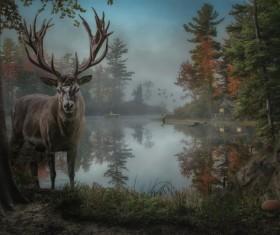 Dark fairy forest Stock Photo 02
