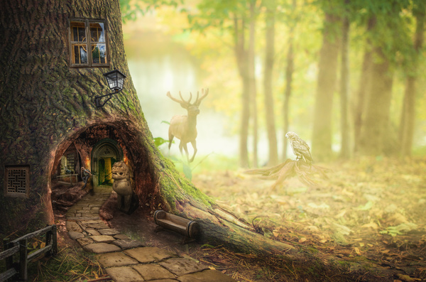Dark fairy forest Stock Photo 03 - Other photo stock photo free download