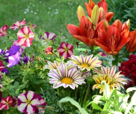 Different colors of flowers in full bloom HD picture