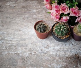 Flowers and cactus HD picture