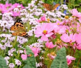 Flowers fluttering butterfly HD picture