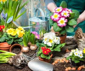 Flowers to soil replacement HD picture