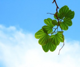 Green and fresh leaves Stock Photo